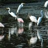There are several species of birds in Nicaragua