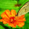 Nicaragua has hundreds of species of insects to enjoy