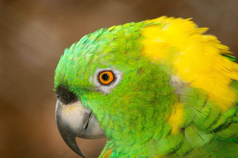 In addition to hosting migratory birds and other seasonal visitors, Nicaragua is home to many colorful native species